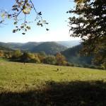 podzim 2010