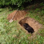 Gina v hrobečku